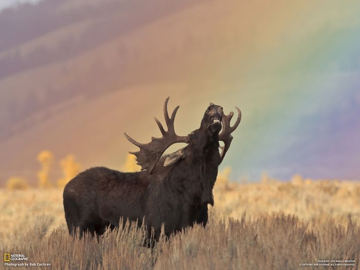 Oh, the feeling of a rainbow streaming down on your antlers.
