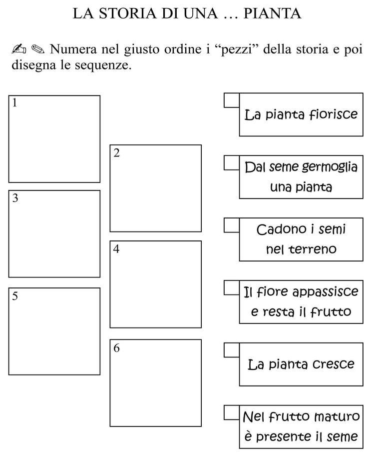 Ciclo della pianta classe materiale e schede for Una storia a pianta aperta
