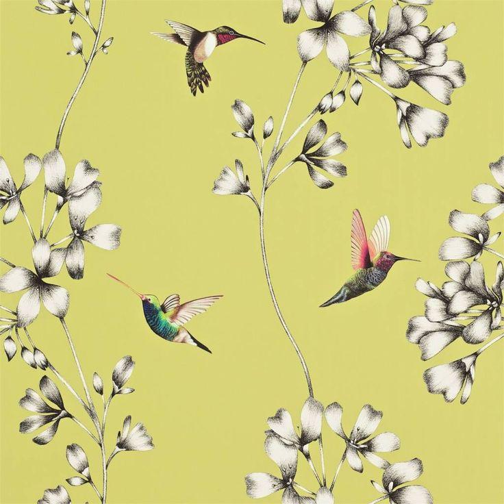 De nieuwe Amazilia collectie van Harlequin kenmerkt zich door exotische tinten en de tropische motieven. Behang Amazilia is een prachtige combinatie van kolibries en geïllustreerde bloemen.