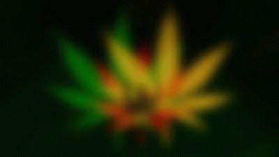 descargar-imagenes-de-marihuanas-gratis