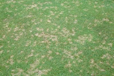Dollar Spot Is A Serious Disease Of Creeping Bentgrass