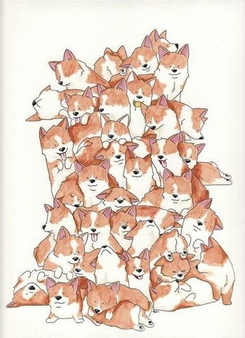 Corgis Everywhere