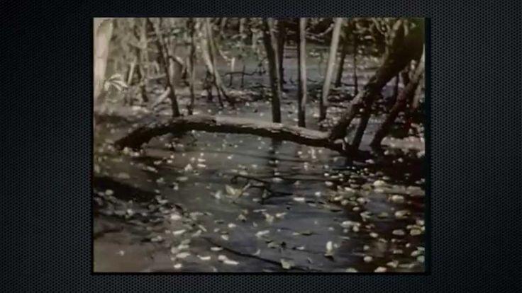 Environmental Impacts of Nickel Mining in Cuba:  Este video también trata sobre la minería en Cuba. Cuba es uno de los principales productores mundiales de níquel. Este proceso de extracción de níquel destruye la tierra y contamina otros recursos naturales como el agua y el aire. La conservación del medio ambiente es muy importante para un futuro sostenible.