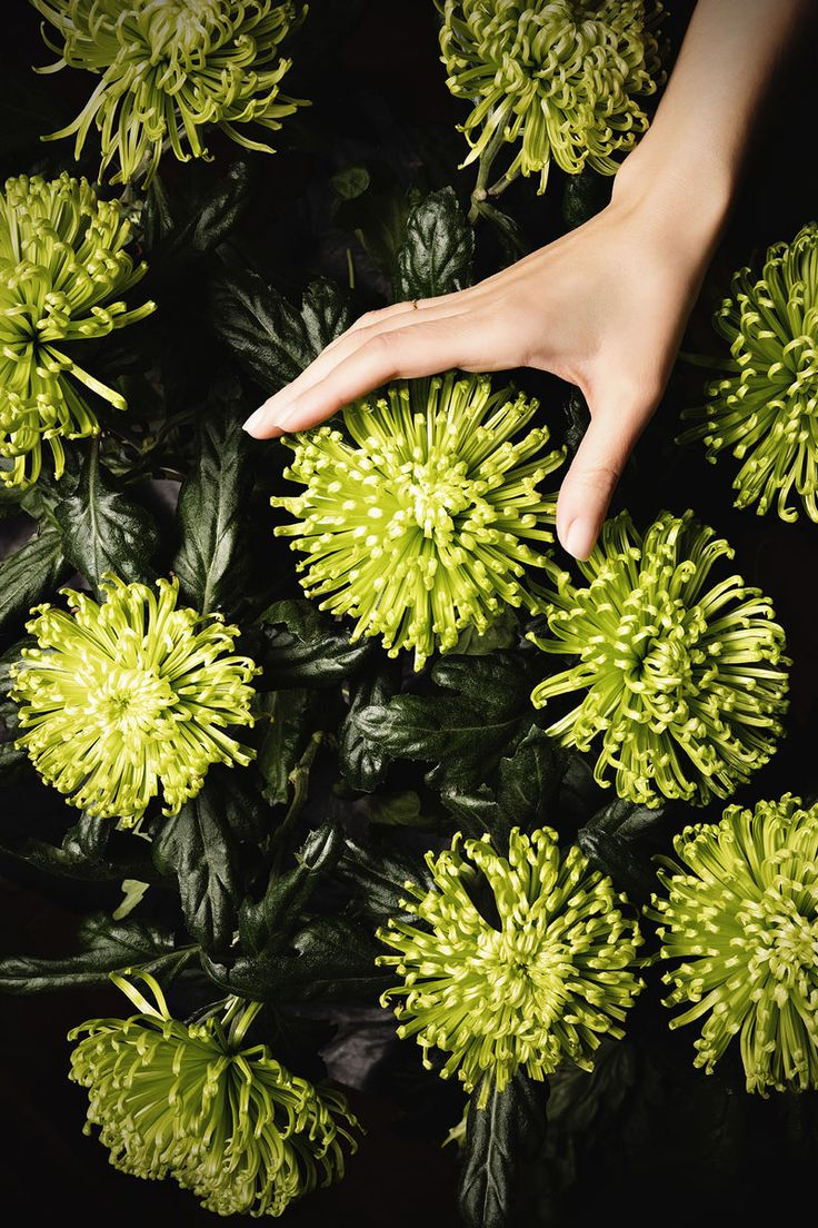 "Let's make the '2016 International Women's Day' a day where we only speak of love. To celebrate the International Women's Day, the photographers and directors Winkler + Noah created a special project dedicated to female victims of violence: a photo series of flowers delicately touched by female hands. Romina Raffaelli, – Noah – tells us what inspired them: ""I believe that women, young or old, want above all sensitivity and respect. Often these are values that we take for granted, but in…"