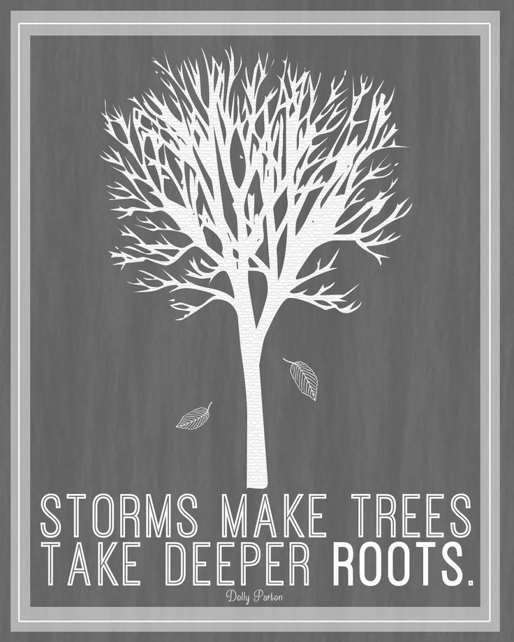 storms make trees grow deeper roots