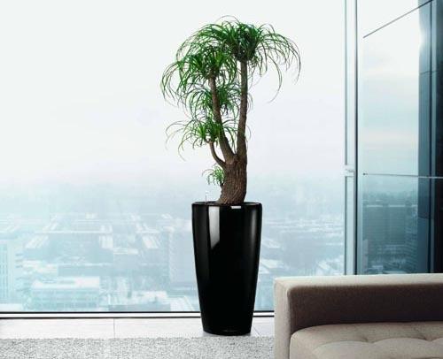 11 best plantes d 39 appartement images on pinterest. Black Bedroom Furniture Sets. Home Design Ideas