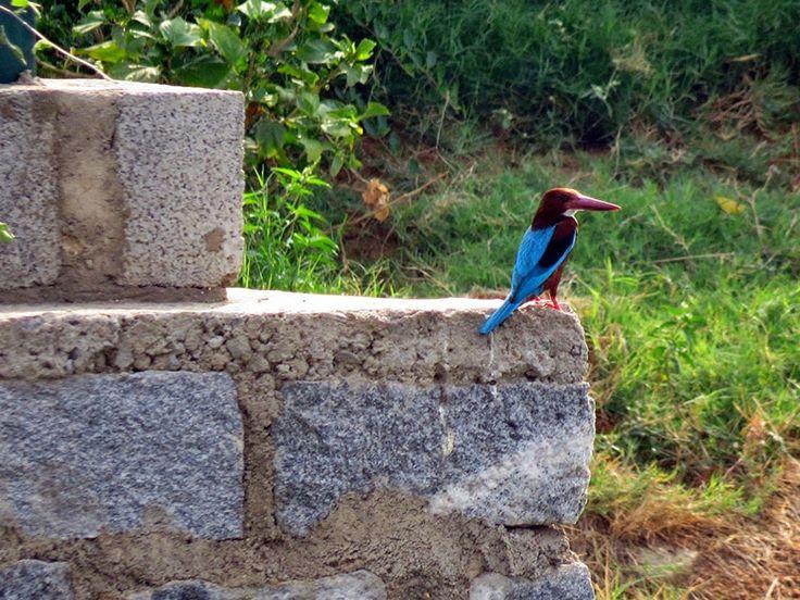 Bhindawas Bird Sanctuary - in Jhajjar, Haryana, India