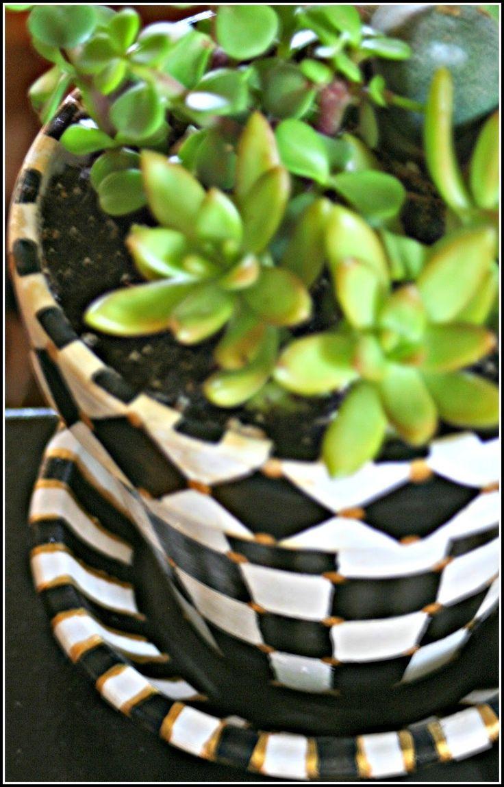 Succulents Black White Checked Pot