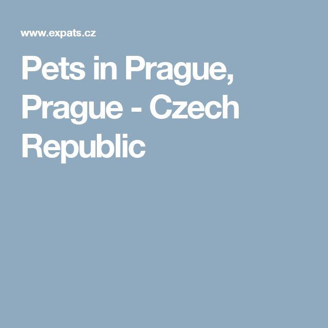 Pets in Prague, Prague - Czech Republic