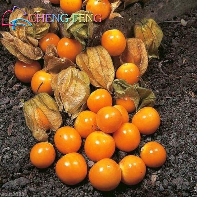 Фамильные 30 семян китайского чуда фрукты зимой смородины вкусный помидоры черри и оранжевые красоты комнатные растения Главная Сад