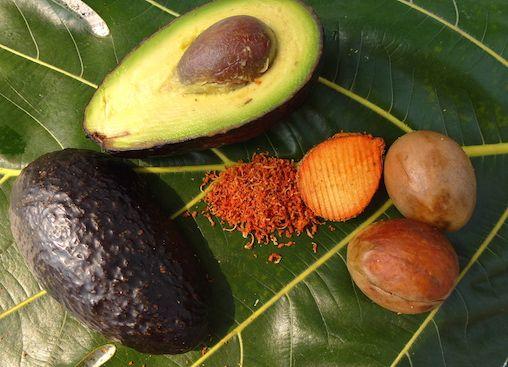 Für die alten mittelamerikanischen Völkerstämme war der Avocadokern ein bekanntes Naturheilmittel, das sie überaus zu schätzen wussten. Sie nutzten den Kern