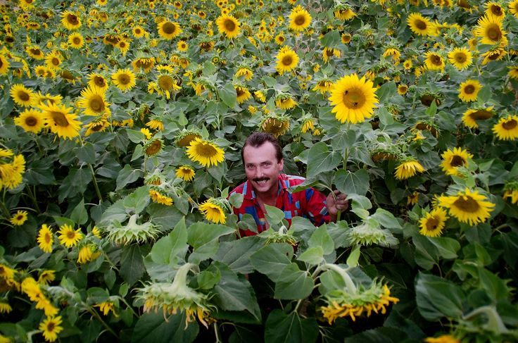 Maxican man in sunflowers