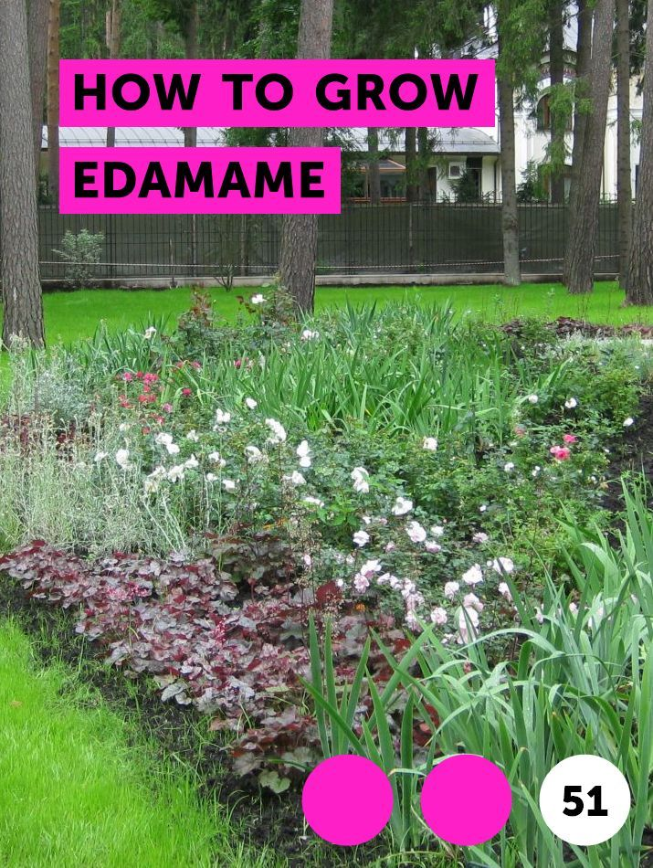 How To Grow Edamame Growing Vegetables Plants Plants In Bottles