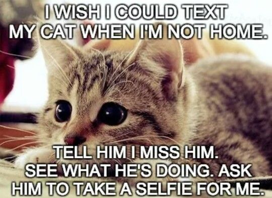 Cute Funny Memes For Him : Best quotes sayings images funny stuff