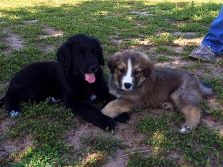 Regole e norme per vivere in condominio con il proprio animale domestico http://www.diariodelcucciolo.it/animali-in-condominio-nuova-legge/