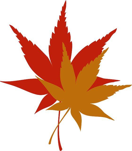 無償のベクターグラフィック: 葉, 秋, シーズン, 黄色, オレンジ, 赤, ツリー, カエデ - Pixabayの無料画像 - 34846