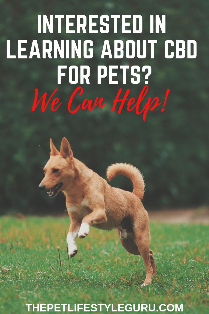 Want To Learn How Cbd Can Help Your Pet We Share Quality Info No Hype No Gimmicks You Ll Learn A Lot Come Check Us Out The Pet Dog Stress