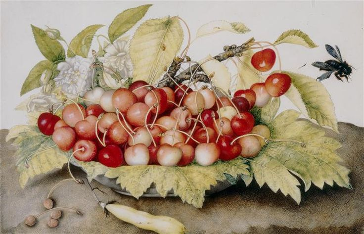 Giovanna Garzoni | Italian Baroque Painter | Still Life