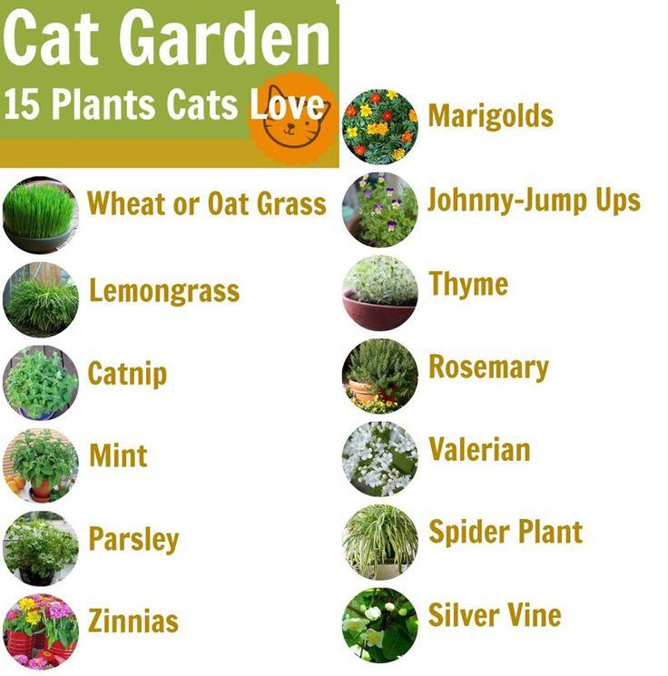 15 Plants Cats Love www.kittycatweb.com