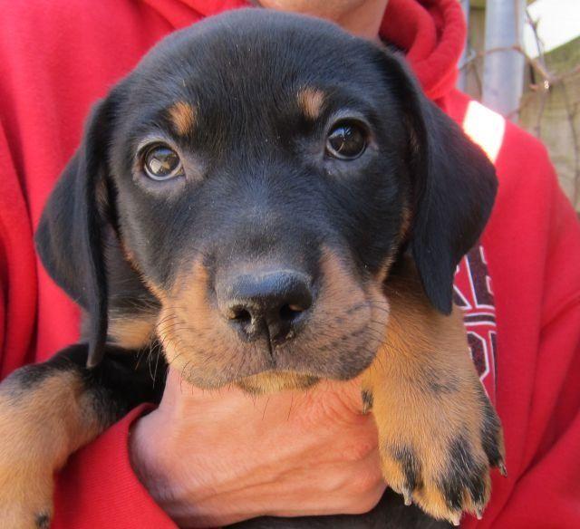 Sophie S Dog Adoption Petfinder