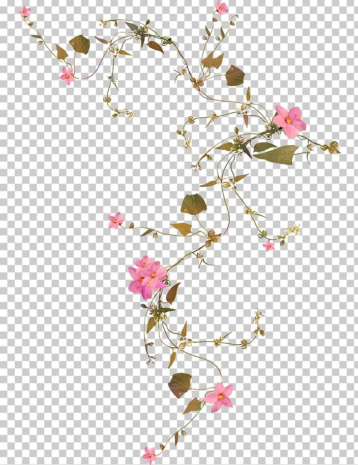 Flower Vine Png Blossom Branch Cherry Blossom China Rose Common Daisy Flowering Vines China Rose Rose Vines