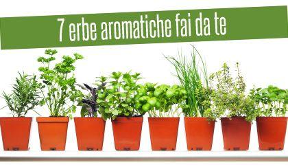 7 erbe aromatiche da coltivare in casa in inverno