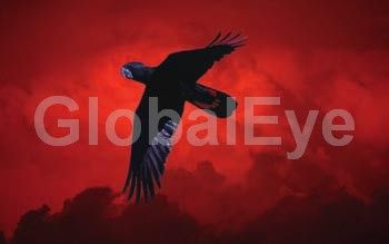 Red tailed black cockatoo in flight  against red sunset sky. Photographer: David Hancock.  Copyright: SkyScans. Photograph By David C Hancock #BirdsPhotography