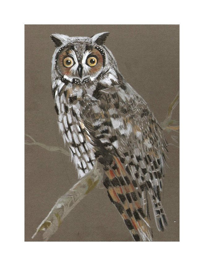 Owl - Original mixed media Painting 5x7 inches Bird wild nature by nekoBlueSKY on Etsy