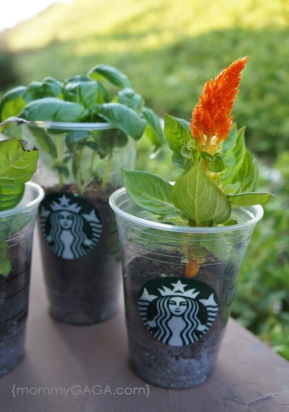 We made planters out of Starbucks plastic cups! The kids and I always enjoy a fun and educational project, especially when it comes to nature and the outdoors. Our latest is a product of my addiction to Starbucks and their frappuccinos, we upcycled our cups into planters!