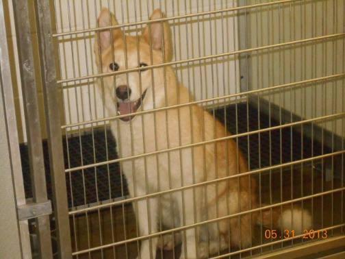 Norwalk Ohio Dog Rescue