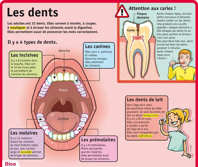 Turbo Les 242 meilleures images du tableau tooth fairy / dentist sur  YZ15