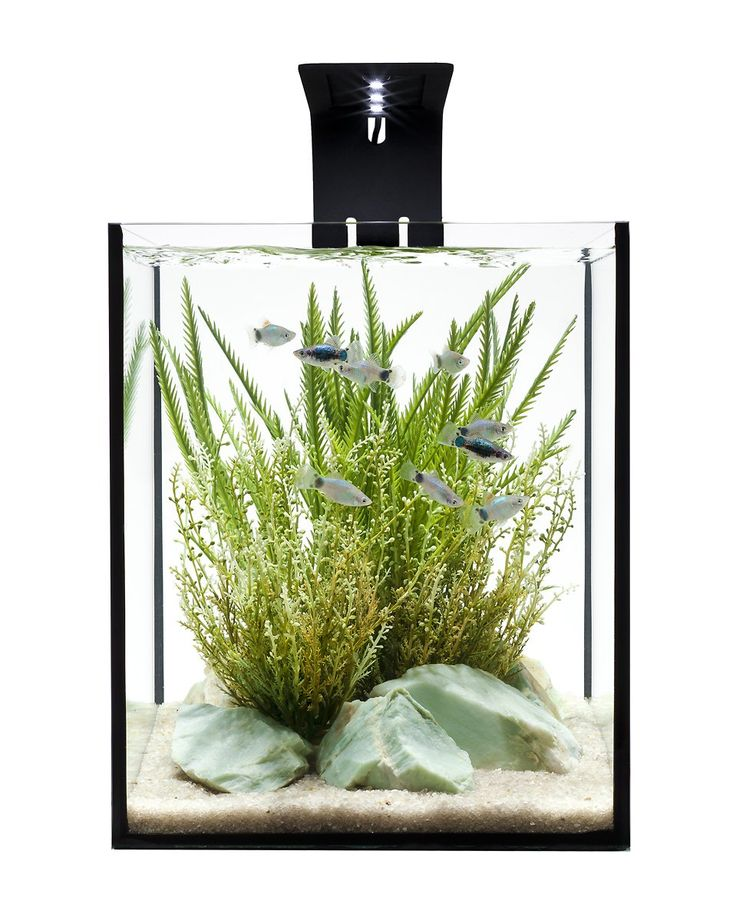 Amazon.com : Ecoxotic EcoPico Desktop Aquarium System with LED Arm and Filter, 5-Gallon : Saltwater Aquarium Kit : Pet Supplies