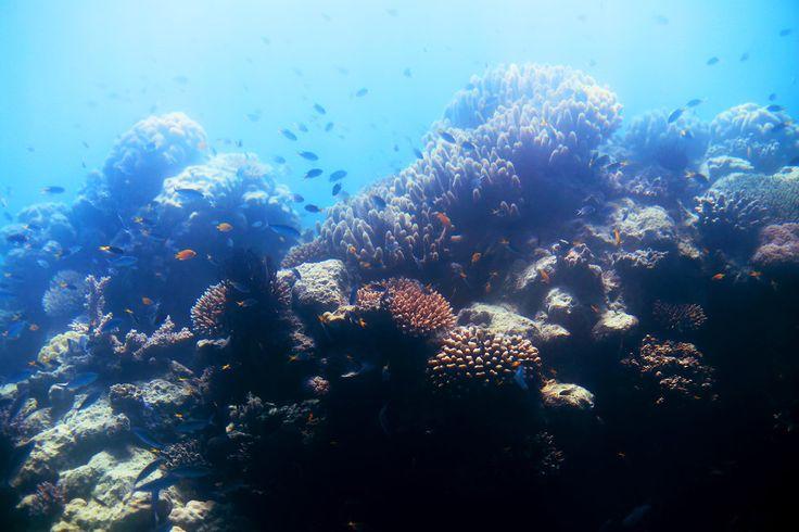 korall stora barriärrevet - sara edström19