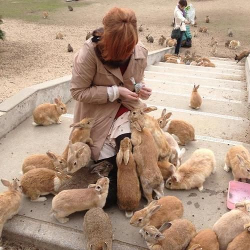 "Okunoshima, Japan. ""Rabbit Island"" so basically there are rabbits everywhere that you can feed and pet and stuff it's overrun by rabbits @Katie Hrubec Thalhamer"