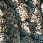 Virginia's shellfish growers sold an estimated 31 million single oysters and 214.4 million clams in 2013 for a farm-gate value of US$45.1 (€32.589) million, an all-time high. That's according to a survey of shellfish aquaculture conducted by the Virginia Institute of Marine Science and Virginia Sea Grant. Photo by Carly Rose/VASG.