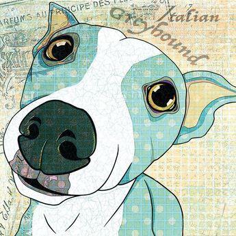 Italian Greyhound - Marmont Hill