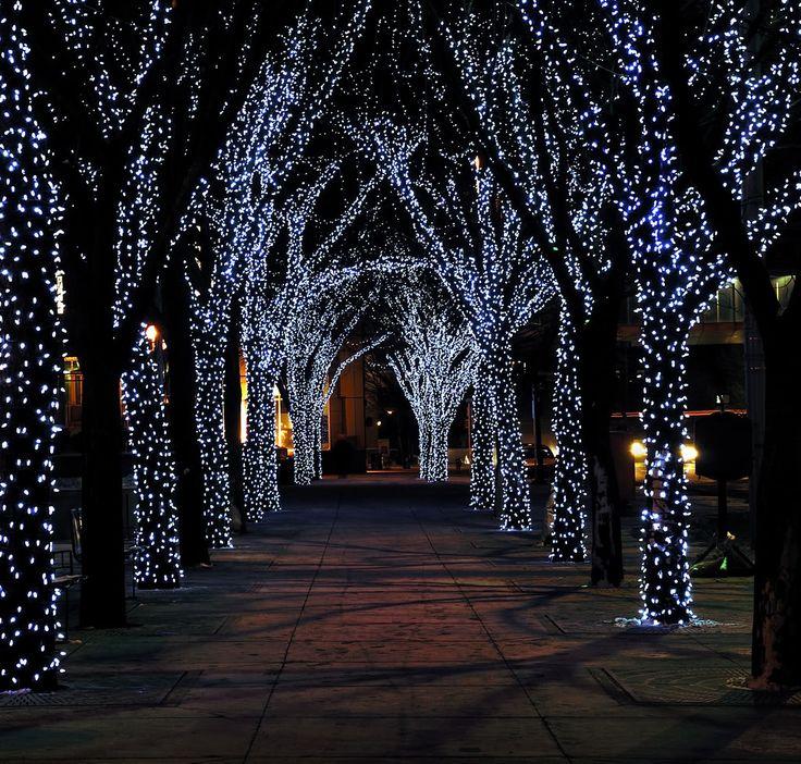I Twinkle Christmas Lights
