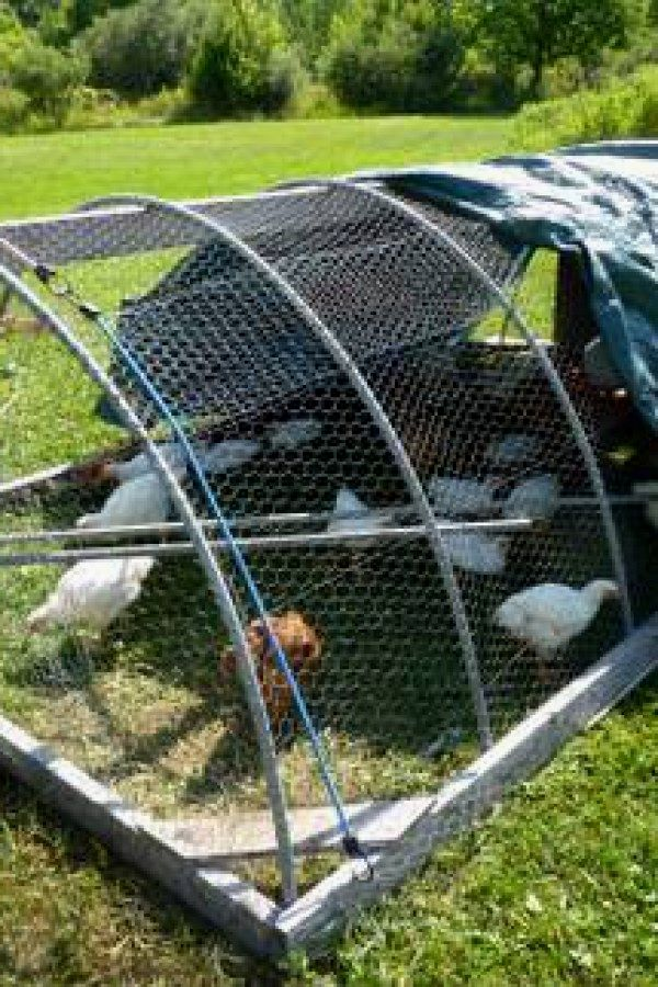 12 Chicken Tractor Ideas Design No 156 Awesome Diy Chicken