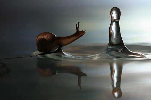 """""""Snail - gastropod with a spiral shell perched on the surface of a puddle in rainy weather in Voronezh region, Russia. This slimy fella looks like he is walking on water. When it rained one day rather than hiding away in his warm shell this snail decided to take a slithery walk over twigs, under grasshoppers and into a puddle. Because of the snail's small size the surface of the water is just strong enough t"""