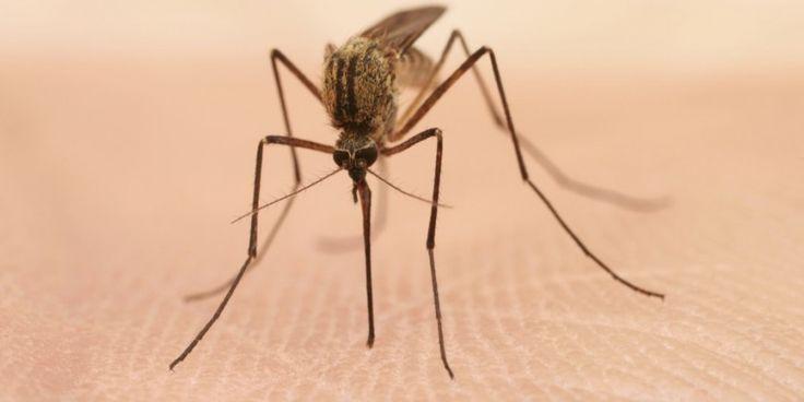 Mücken und Mückenstiche – Mückenstiche behandeln, Mückenschutz - Onmeda.de