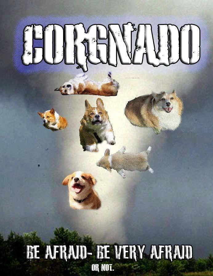 34 Best Corgi Movie Posters Images On Pinterest