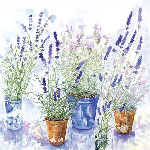 Name Lavender Pots Code Fp6027 Price 2 00 Presentation Comes With A White 100gsm Envelope Blank Fo Watercolor Flowers Paintings Artist Watercolor Flowers