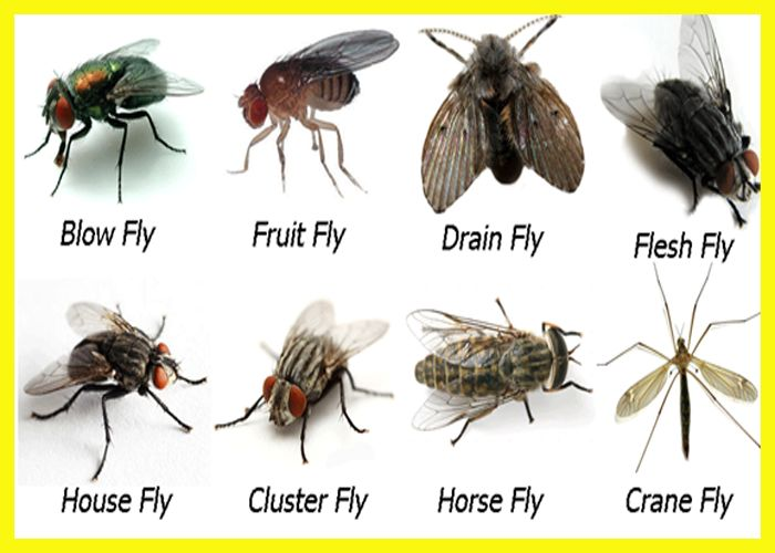 What Might Gnats Fruitflies Furniture And Shoes Mean In