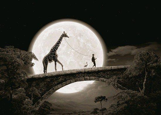 giraffe on a leash: Thomas Herbrich, Moon, Photos Manipulation, Kids Room, Art, The Bridges, Blog Design, Photography, Giraffes