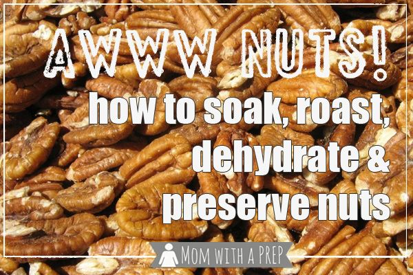 Awww NUTS! A Guide to Nuts and Their Long-Term Storage Benefits