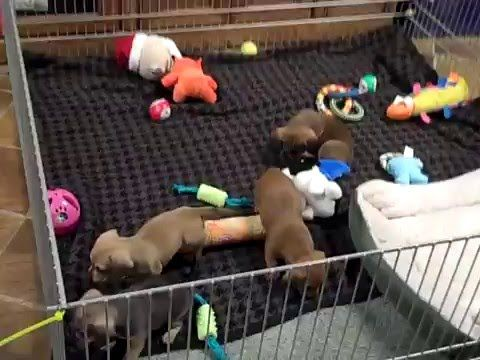 Home Depot - Create A Puppy Playpen Part 2