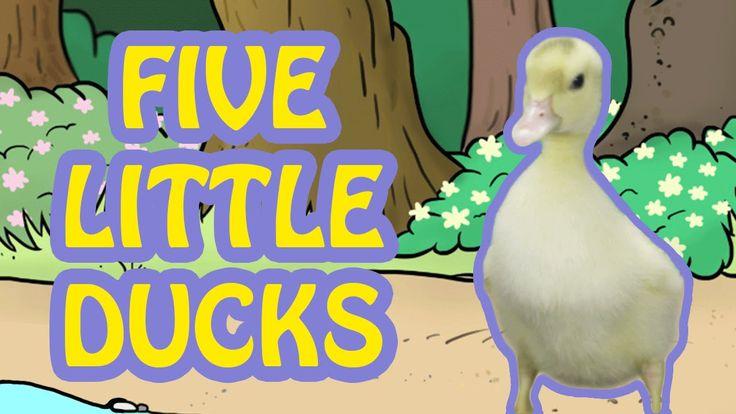 5 Little Ducks  |  Video Nursery Rhymes for Kids  | Cute Animals