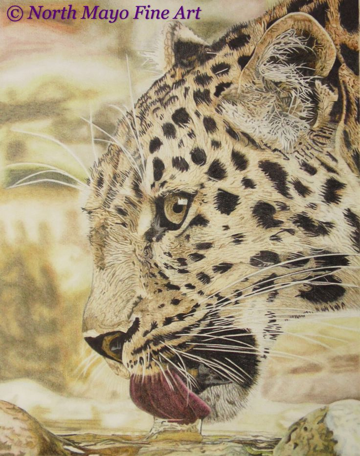 Coloured pencil drawing 'Thirsty Leopard'