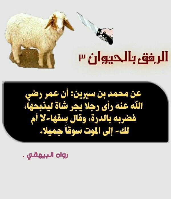 الرفق بالحيوان او الحيوانات اخلاق اسلامية مفقودة عند البعض Poster Movie Posters Movies