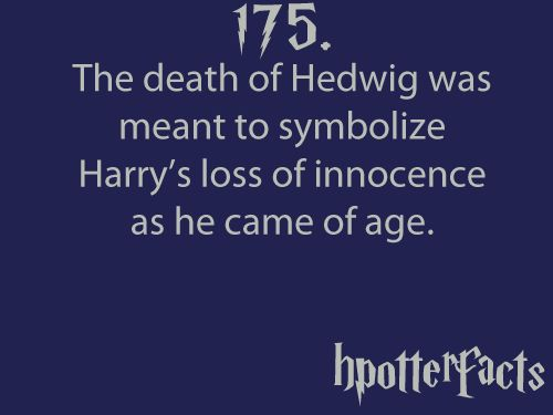 175.: Hedwig Die, Poor Hedwig, Hpotterfact 3, Solemn Swear, Hpotter Facts, Hp Facts, Harry Potter Facts 175, Hpotterfact With Tumblr, Hpotterfact 175